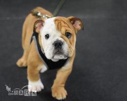 emBARK Building Blocks Puppy Classes