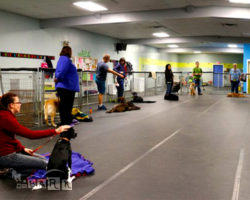 emBARK Dog Fitness and Tricks Classes