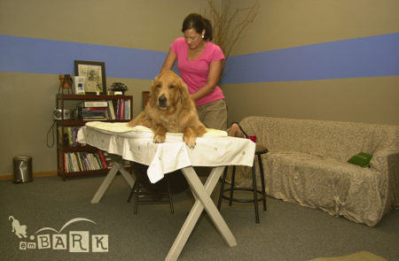 emBARK Canine Massage