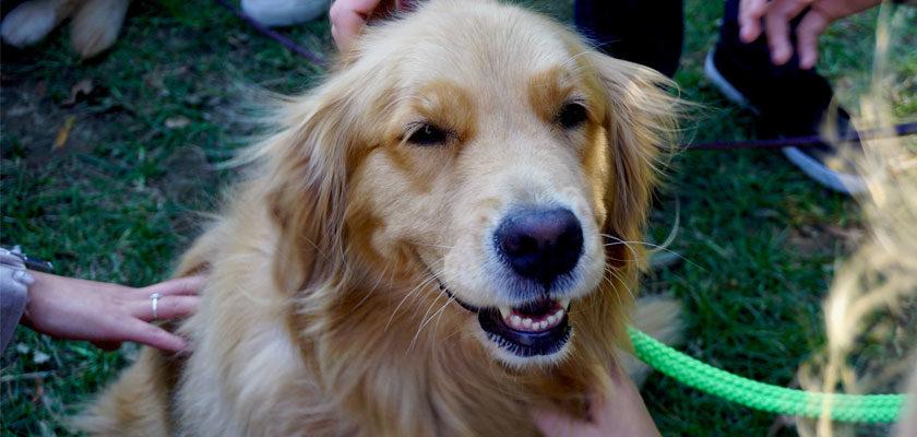 Dog Bite Prevention Week (4/12/21)